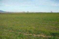 Vendesi terreno agricolo